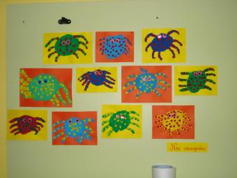 Nos araignées