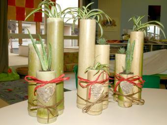 bambous Et plantes