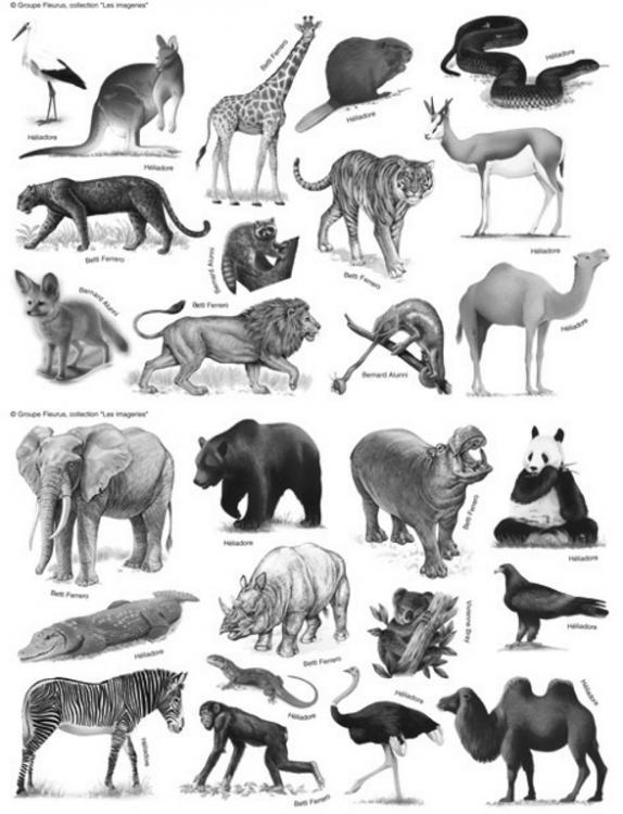 Planche-animaux.jpg