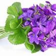 violettine