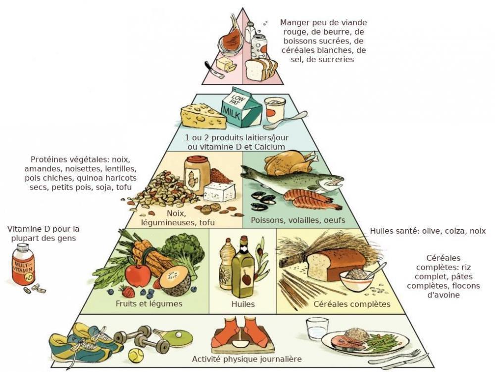 pyramide nutrition Harvard.jpg